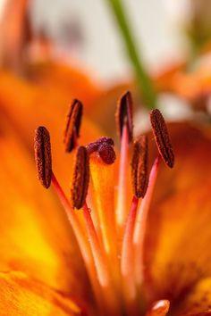 Obst Und Gemüse Ausmalbilder Genial Die 45 Besten Bilder Von Rosen Schönheiten Im Garten In 2018 Fotos