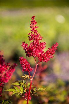 Obst Und Gemüse Ausmalbilder Inspirierend Die 45 Besten Bilder Von Rosen Schönheiten Im Garten In 2018 Bilder