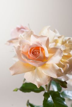 Obst Und Gemüse Ausmalbilder Inspirierend Die 45 Besten Bilder Von Rosen Schönheiten Im Garten In 2018 Stock
