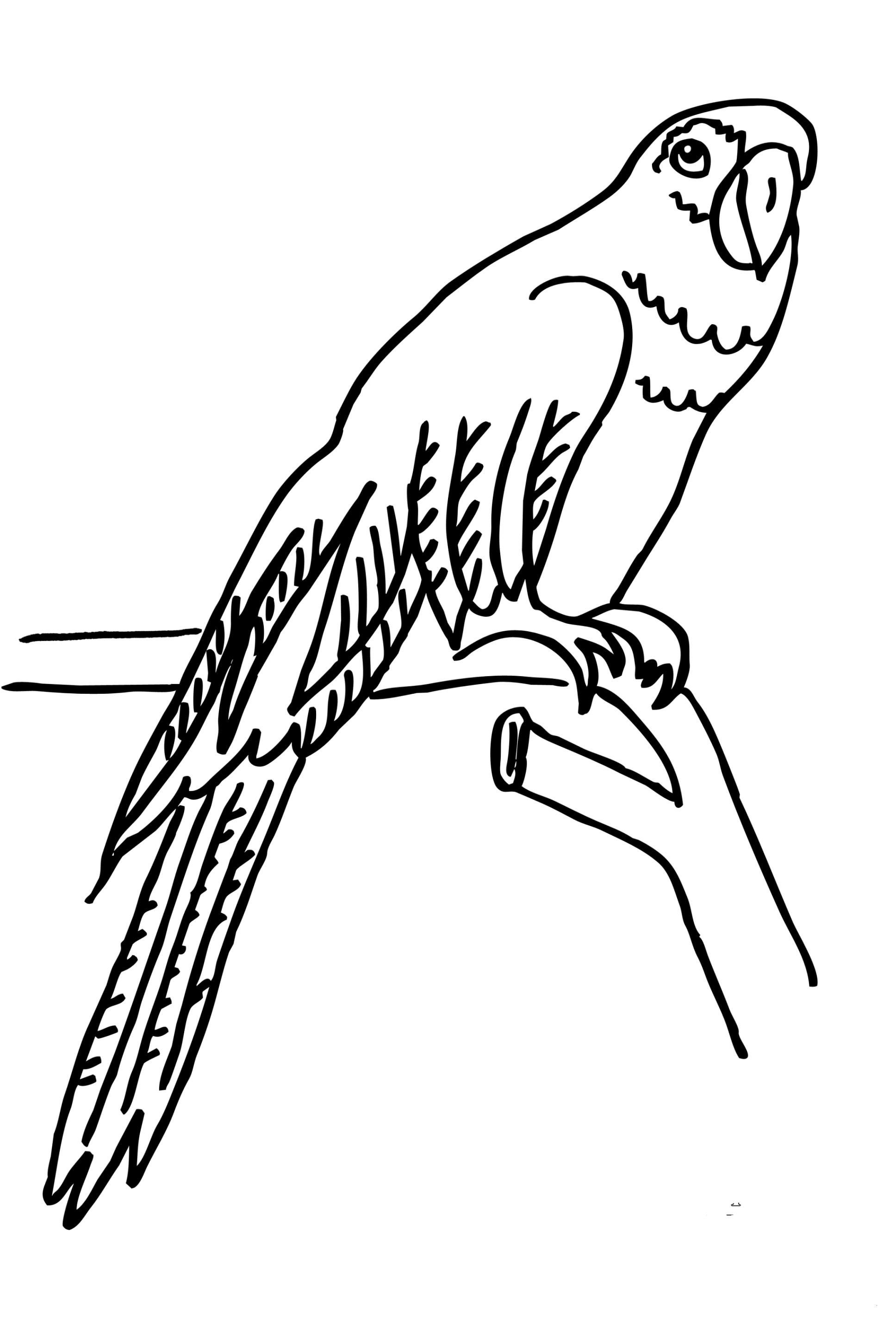 Papagei Zum Ausmalen Einzigartig 40 Schön Papagei Ausmalbilder – Große Coloring Page Sammlung Bilder