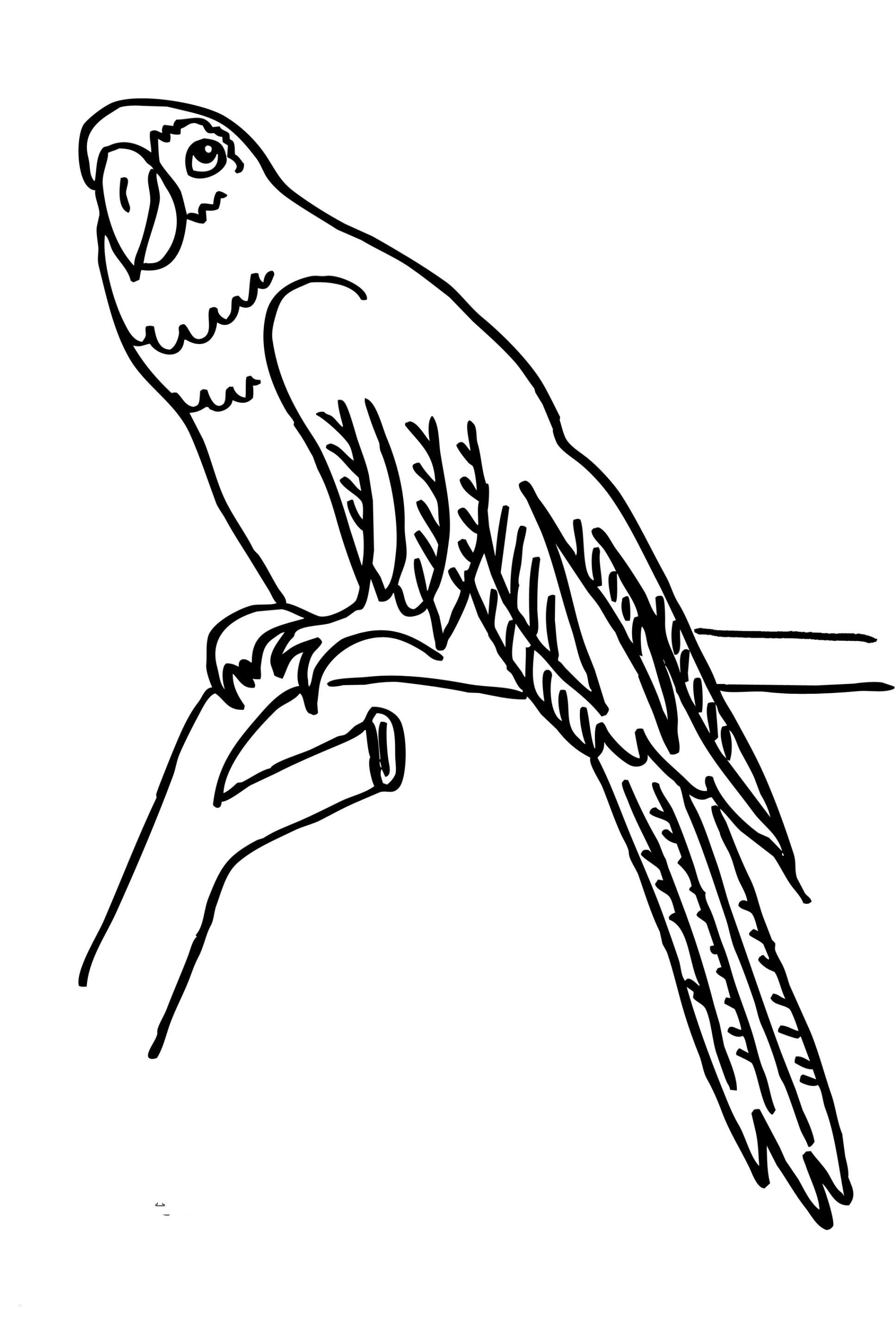 Papagei Zum Ausmalen Frisch 40 Ausmalbilder Papagei Scoredatscore Schön Ausmalbilder Fliegender Galerie