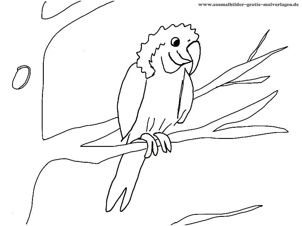 Papagei Zum Ausmalen Frisch 42 Neu Papagei Ausmalen – Große Coloring Page Sammlung Fotografieren