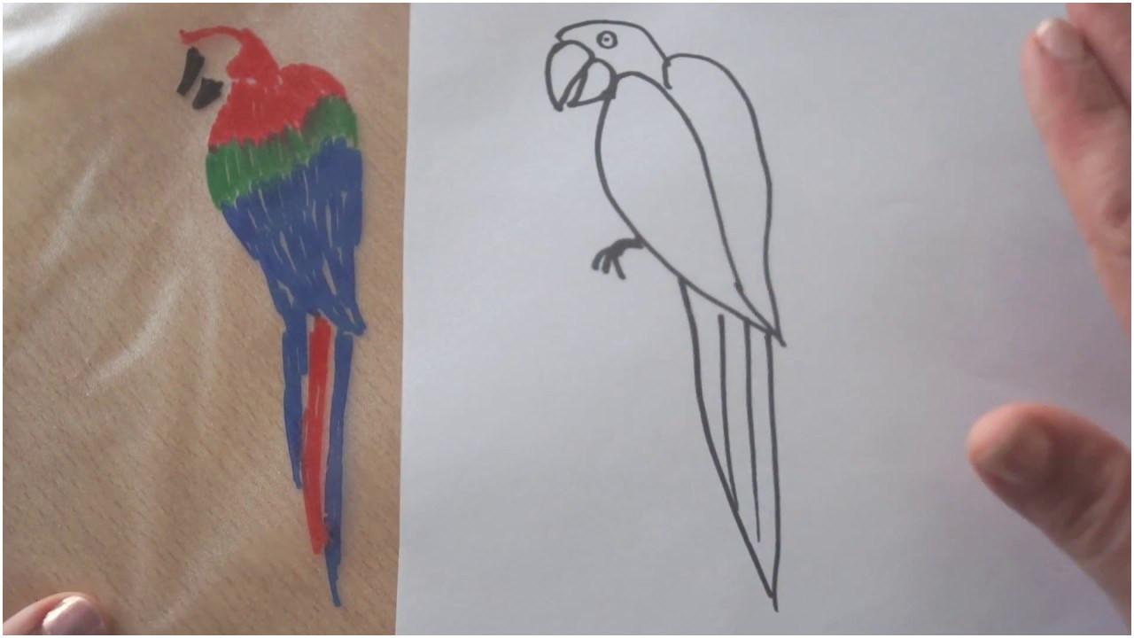 Papagei Zum Ausmalen Genial 42 Neu Papagei Ausmalen – Große Coloring Page Sammlung Galerie