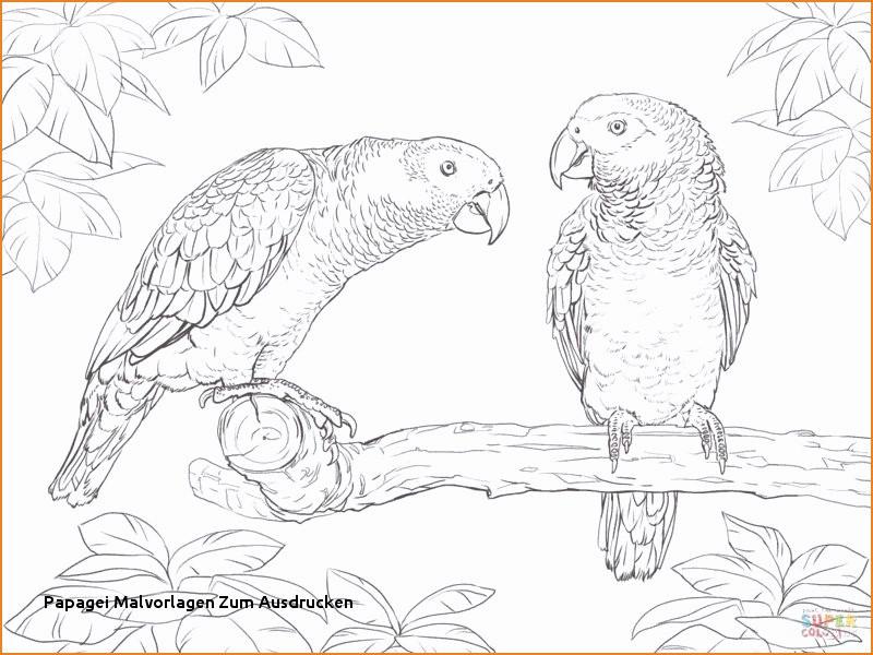 Papagei Zum Ausmalen Genial Tier Ausmalbilder Zum Ausdrucken Beispiele Resume En Ingles From Fotos