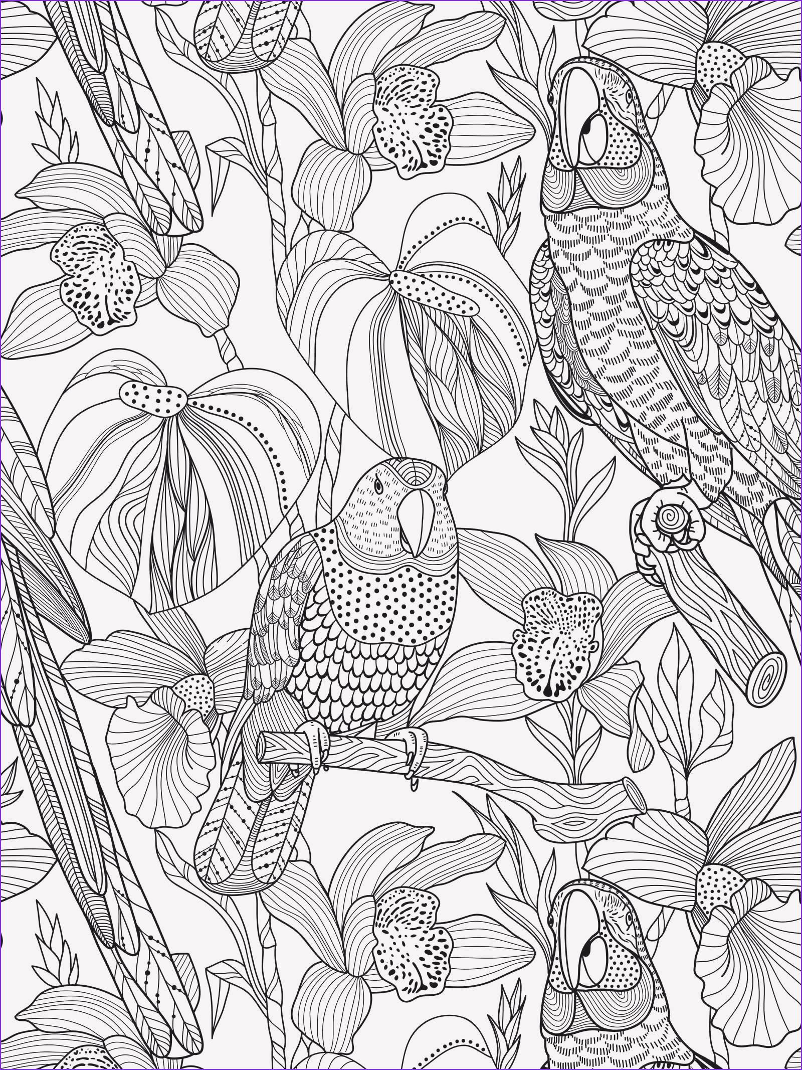 Papagei Zum Ausmalen Inspirierend 40 Schön Papagei Ausmalbilder – Große Coloring Page Sammlung Stock