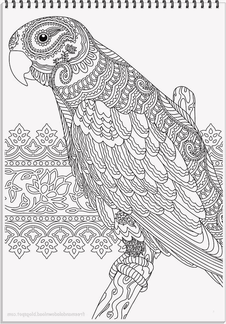 Papagei Zum Ausmalen Neu 40 Schön Papagei Ausmalbilder – Große Coloring Page Sammlung Fotografieren