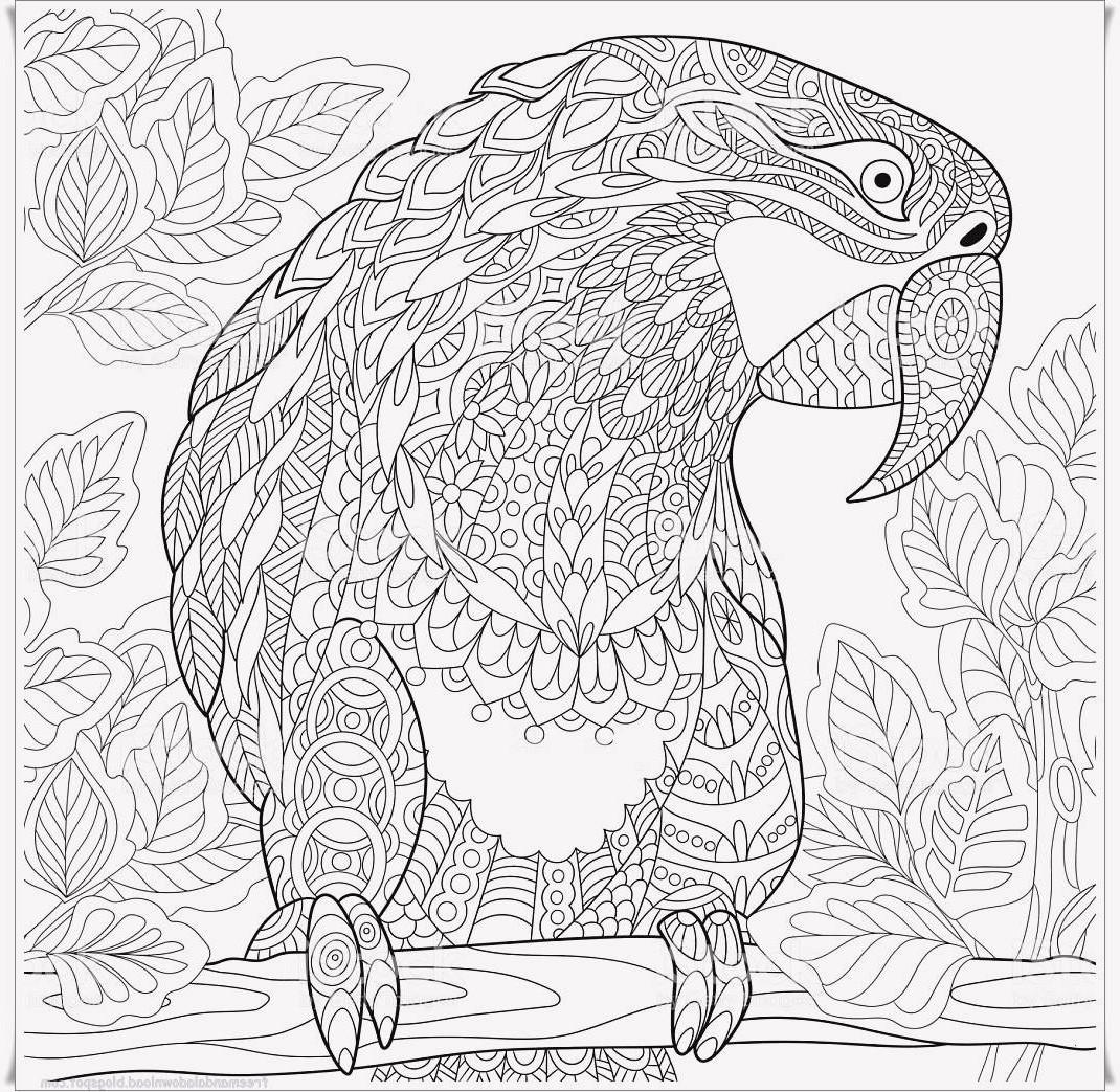 Papagei Zum Ausmalen Neu 40 Schön Papagei Ausmalbilder – Große Coloring Page Sammlung Galerie