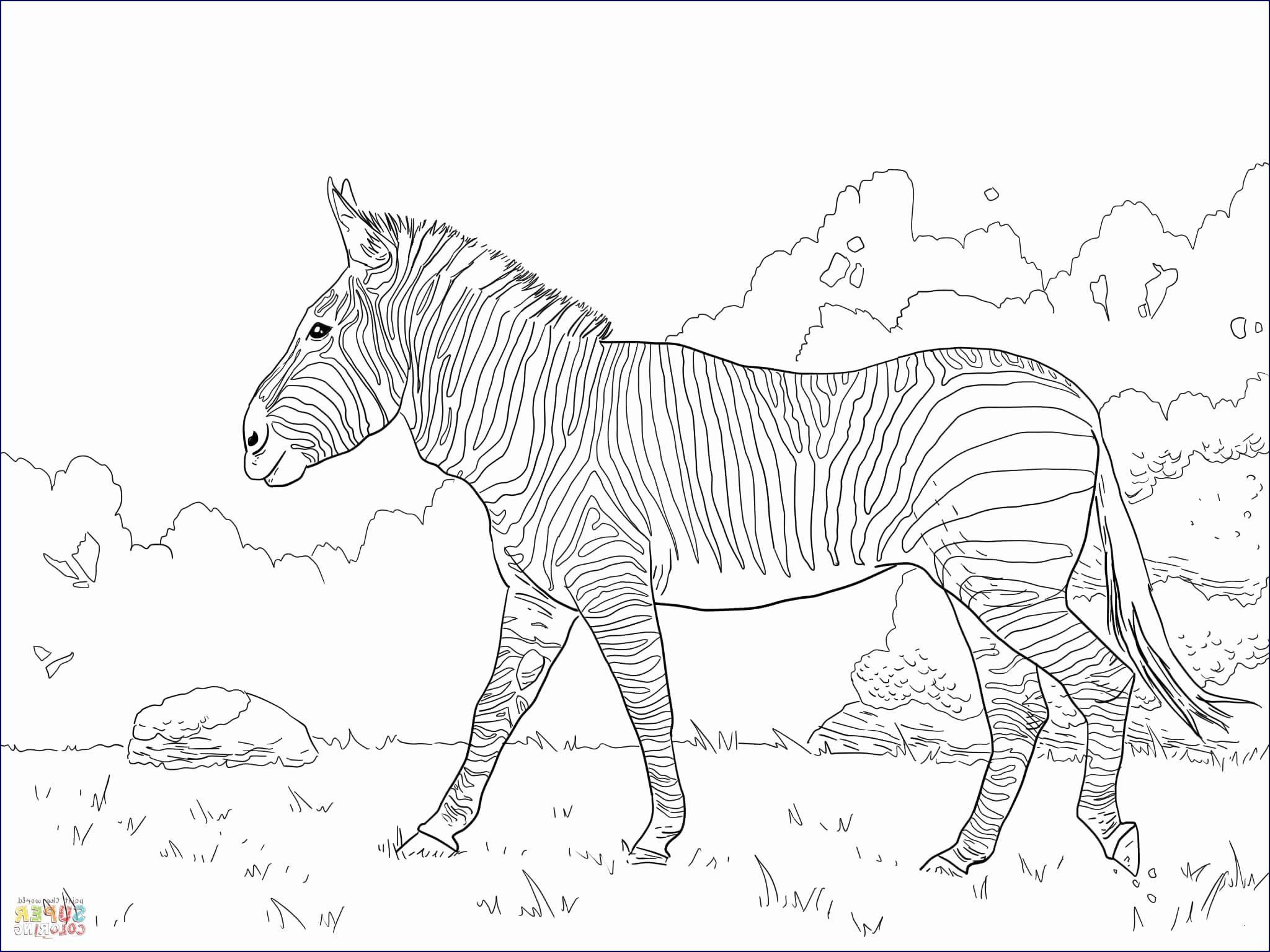 Pegasus Zum Ausmalen Das Beste Von 34 Einzigartig Unicorn Zum Ausmalen – Malvorlagen Ideen Fotos