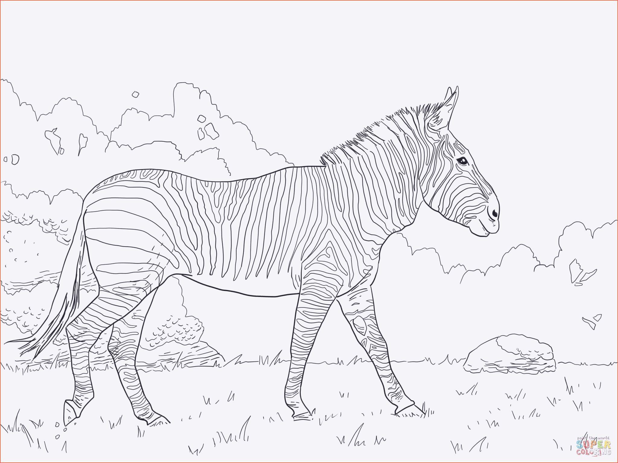 Pferde Ausmalbilder Horseland Einzigartig Malvorlagen Schleich