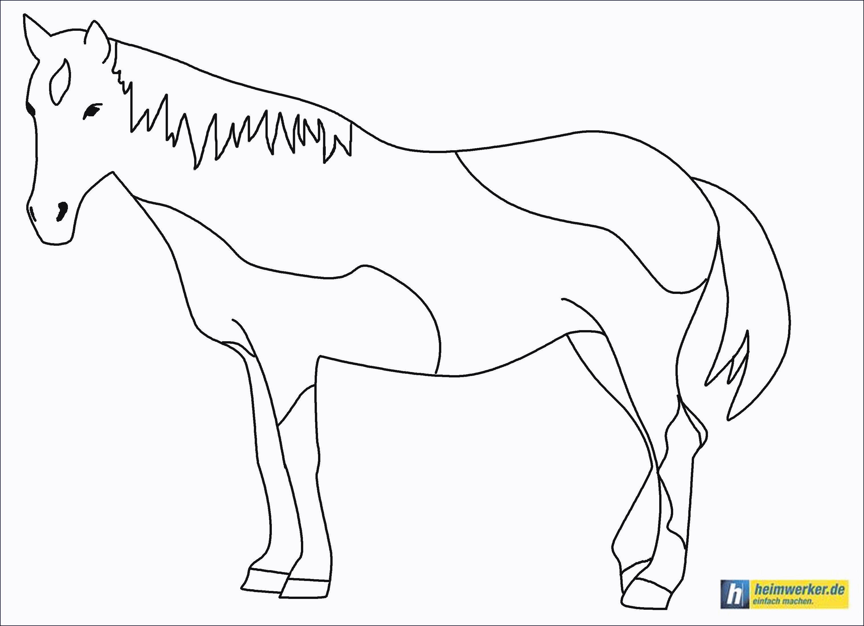 Pferde Ausmalbilder Mit Reiter Das Beste Von 45 Pferd Mit Reiter Ausmalbild Bilder
