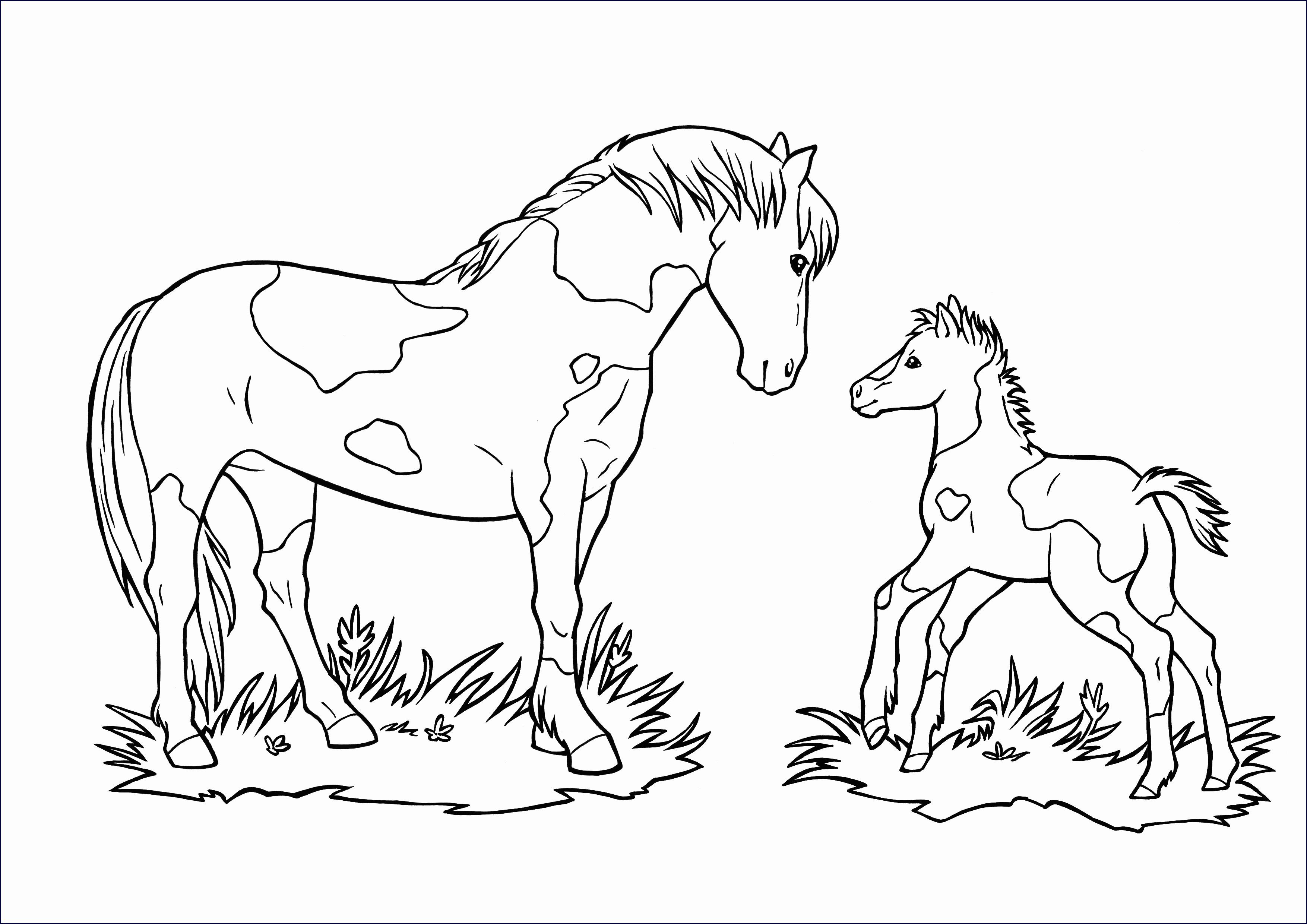 Pferde Ausmalbilder Mit Reiter Frisch Malvorlage Pferd Mit Reiter Stock