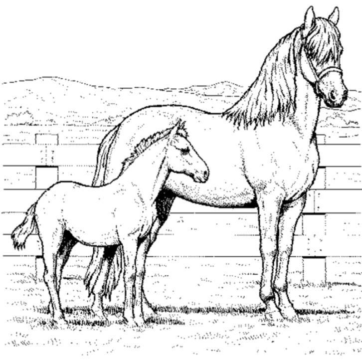 Pferde Ausmalbilder Mit Reiter Genial 45 Pferd Mit Reiter Ausmalbild Bild