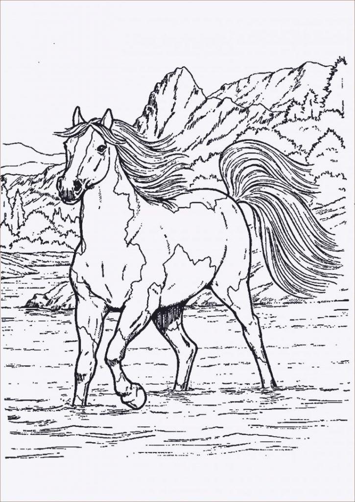 Pferde Ausmalbilder Mit Reiter Genial Janbleil 25 Gut Aussehend Ausmalbilder Pferde Und Reiter Sammlung