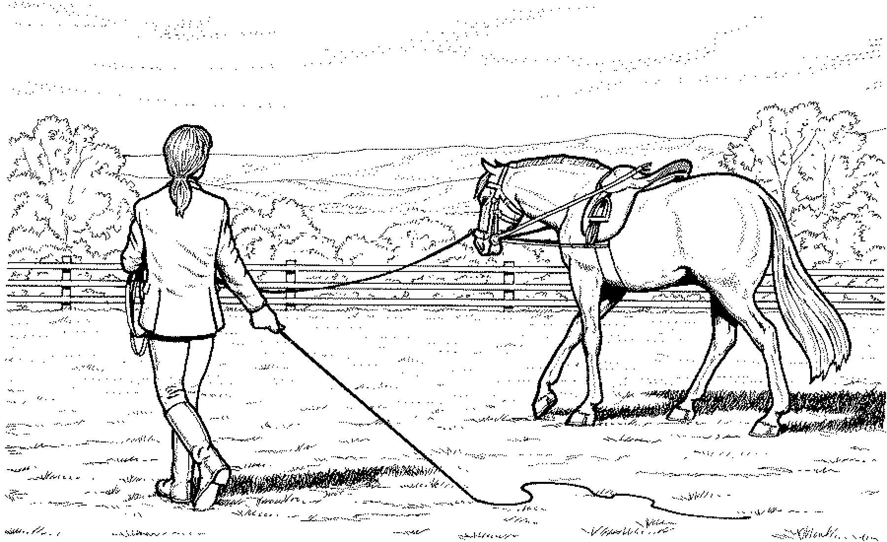 Pferde Ausmalbilder Mit Reiter Inspirierend Malvorlage Pferd Mit Reiter Fotos