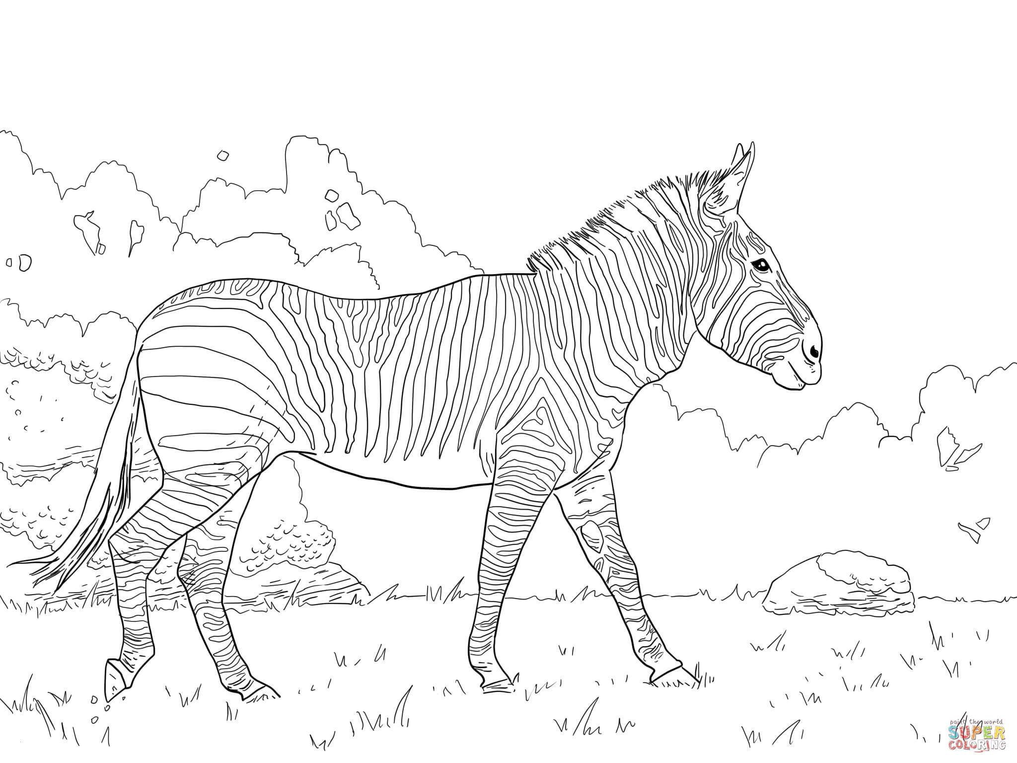 Pferde Ausmalbilder Zum Drucken Das Beste Von Pferde Bilder Zum Ausmalen Luxus Malvorlagen Erwachsene Pferd Ideen Das Bild