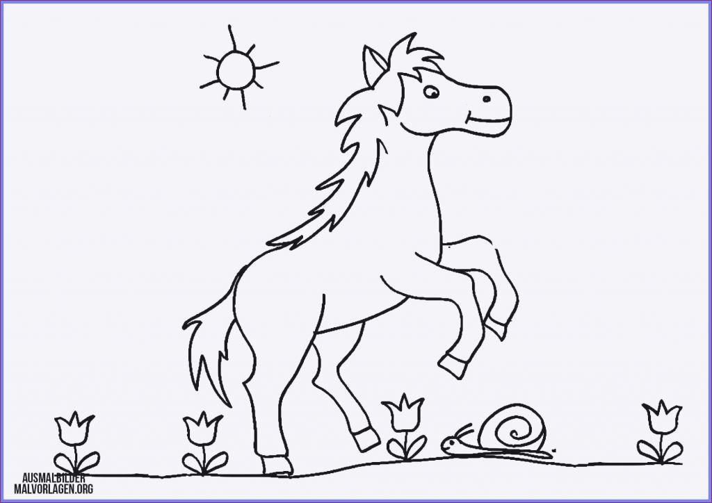 pferde ausmalbilder zum drucken frisch ausmalbilder pferde