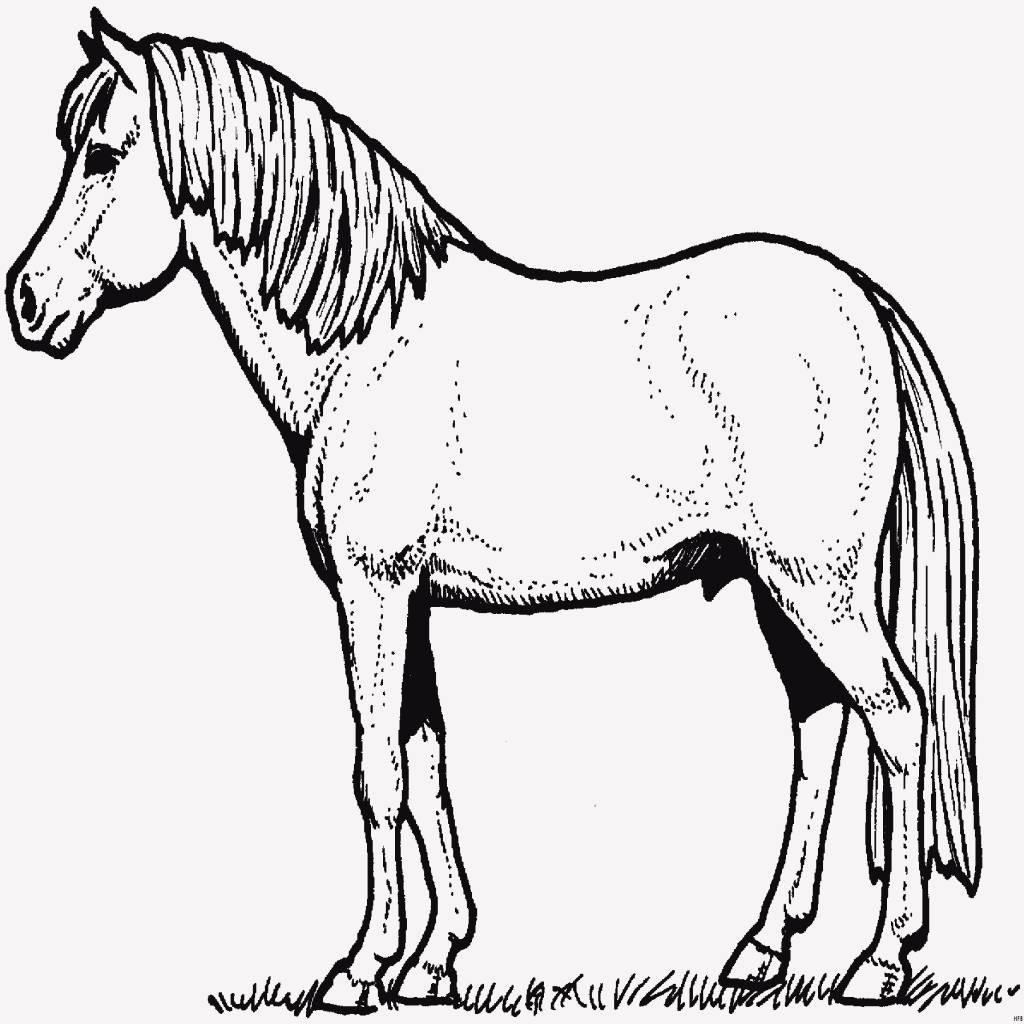 Pferde Ausmalbilder Zum Drucken Genial 25 Genial Pferde Ausmalbild Zum Ausdrucken Das Bild