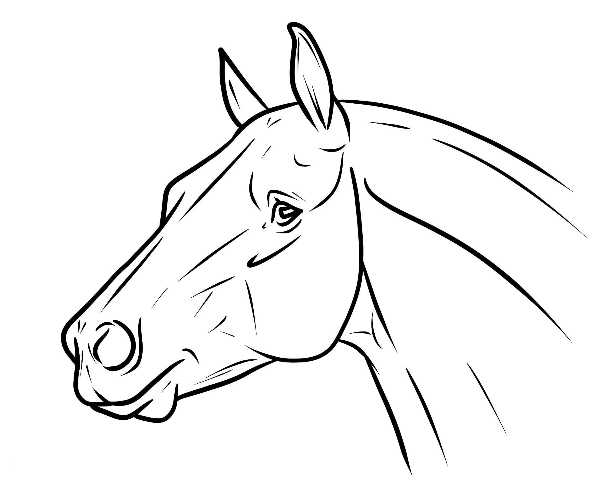 Pferde Ausmalbilder Zum Drucken Neu Ausmalbilder Bibi Und Tina Pferde Neu Malvorlagen Igel Elegant Igel Stock
