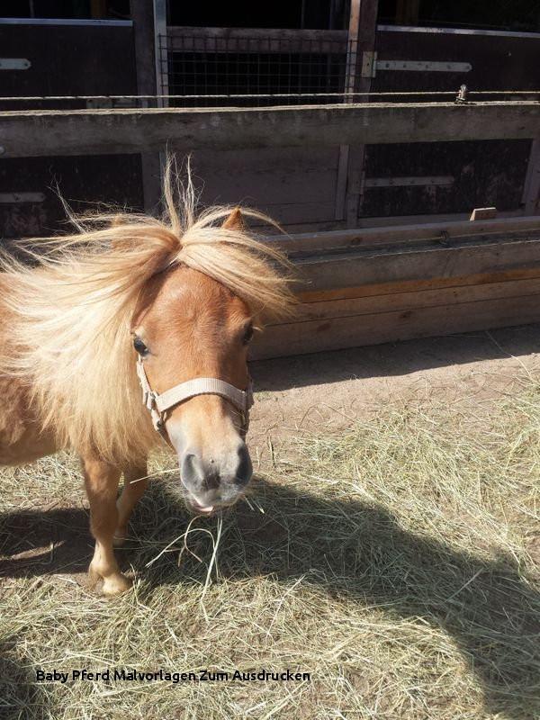Pferde Bilder Zum Ausdrucken Einzigartig Baby Pferd Malvorlagen Zum Ausdrucken Suche Eine Mini Shetty Bild