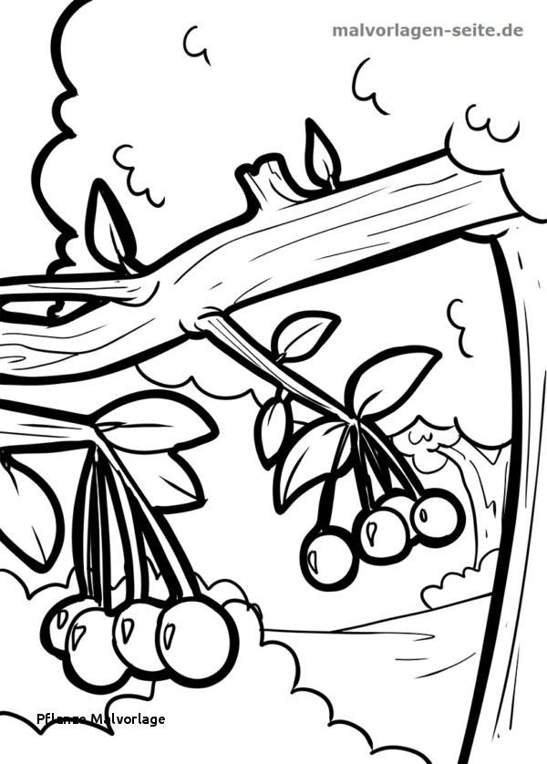 Pflanzen Gegen Zombies Ausmalbilder Frisch Pflanze Malvorlage Ausmalbild Speisekürbis Luxus Pflanzen Gegen Galerie