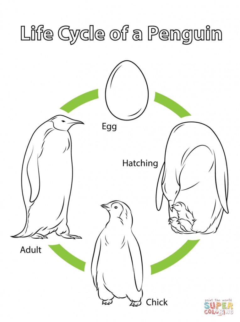 Pinguin Vorlage Zum Ausmalen Einzigartig Janbleil Ausmalbilder Zum Ausdrucken Pinguin Das Beste Von Fotografieren
