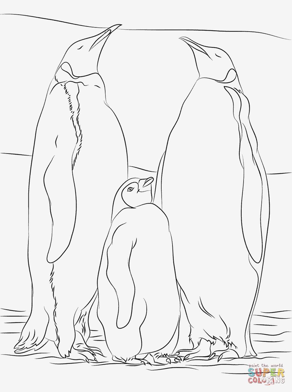 Pinguin Vorlage Zum Ausmalen Inspirierend Eine Sammlung Von Färbung Bilder Pinguin Ausmalbilder Das Bild