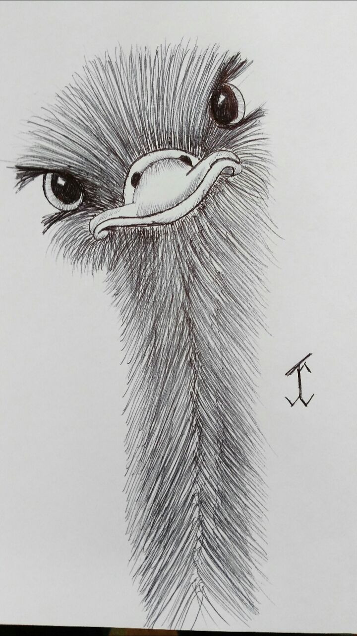 Pinterest Bilder Malen Genial Ostrich Warli Pinterest Das Bild