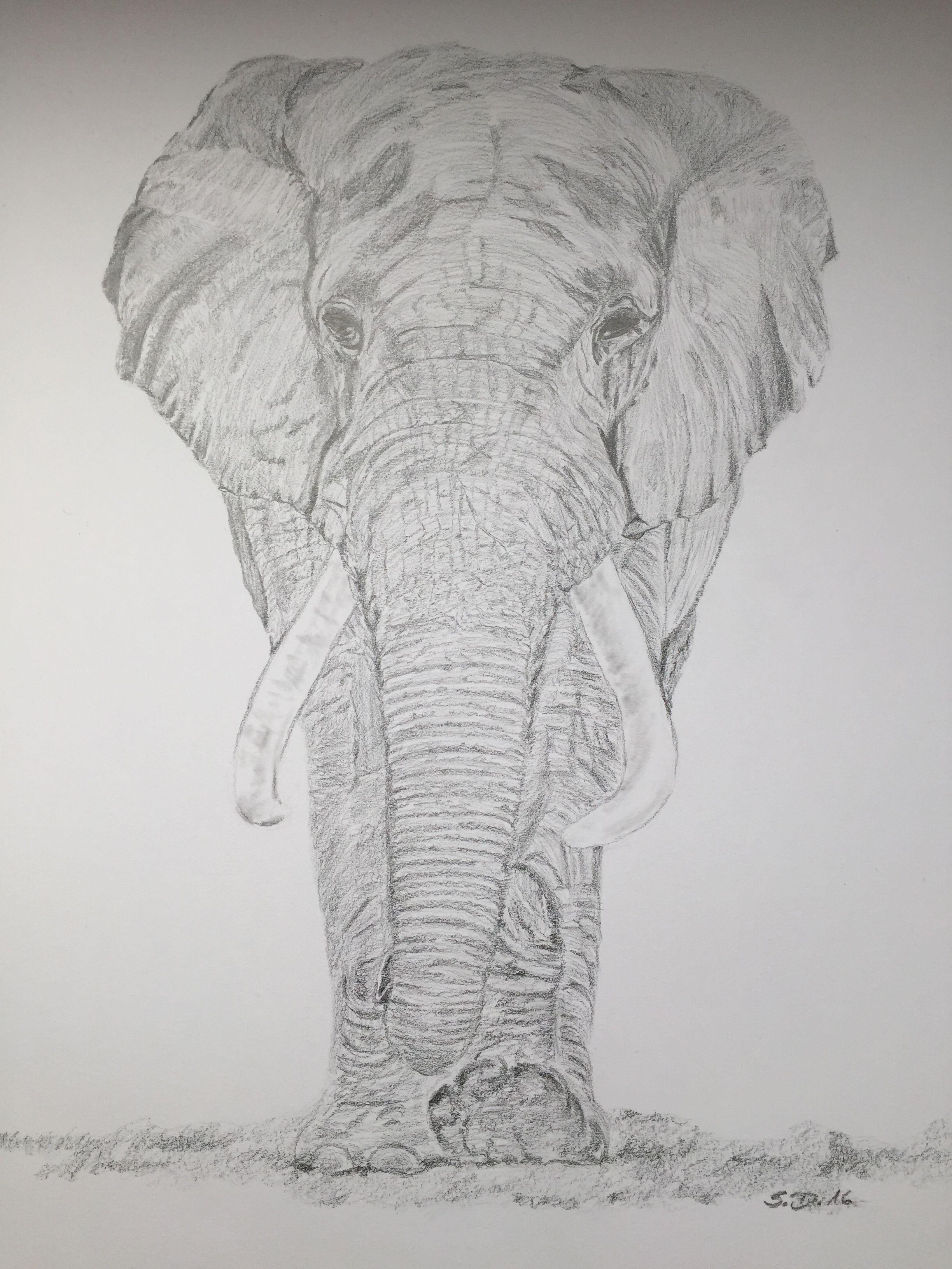 Pinterest Zeichnungen Bleistift Einzigartig Elefant Bleistift Zeichnung Zeichnen In 2018 Sammlung