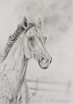 Pinterest Zeichnungen Bleistift Genial 57 Besten Pferde Skizze Bilder Auf Pinterest Bilder