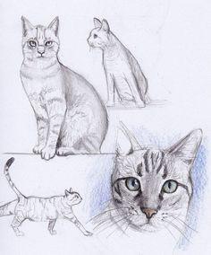 Pinterest Zeichnungen Bleistift Neu 348 Besten Bleistift Bilder Auf Pinterest In 2018 Bilder
