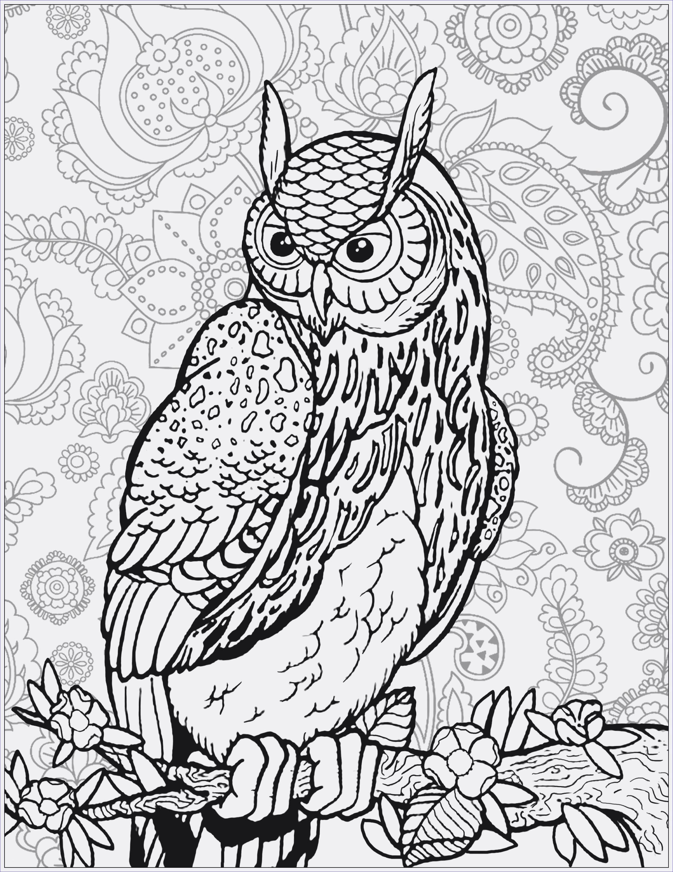 Reh Bilder Zum Ausmalen Frisch Ausmalbild Fee Bildergalerie & Bilder Zum Ausmalen Coloring Owls Galerie