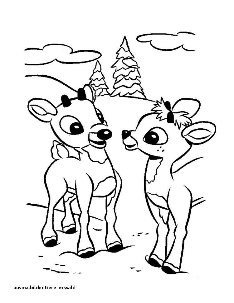 Reh Bilder Zum Ausmalen Genial 28 Ausmalbilder Tiere Im Wald Das Bild