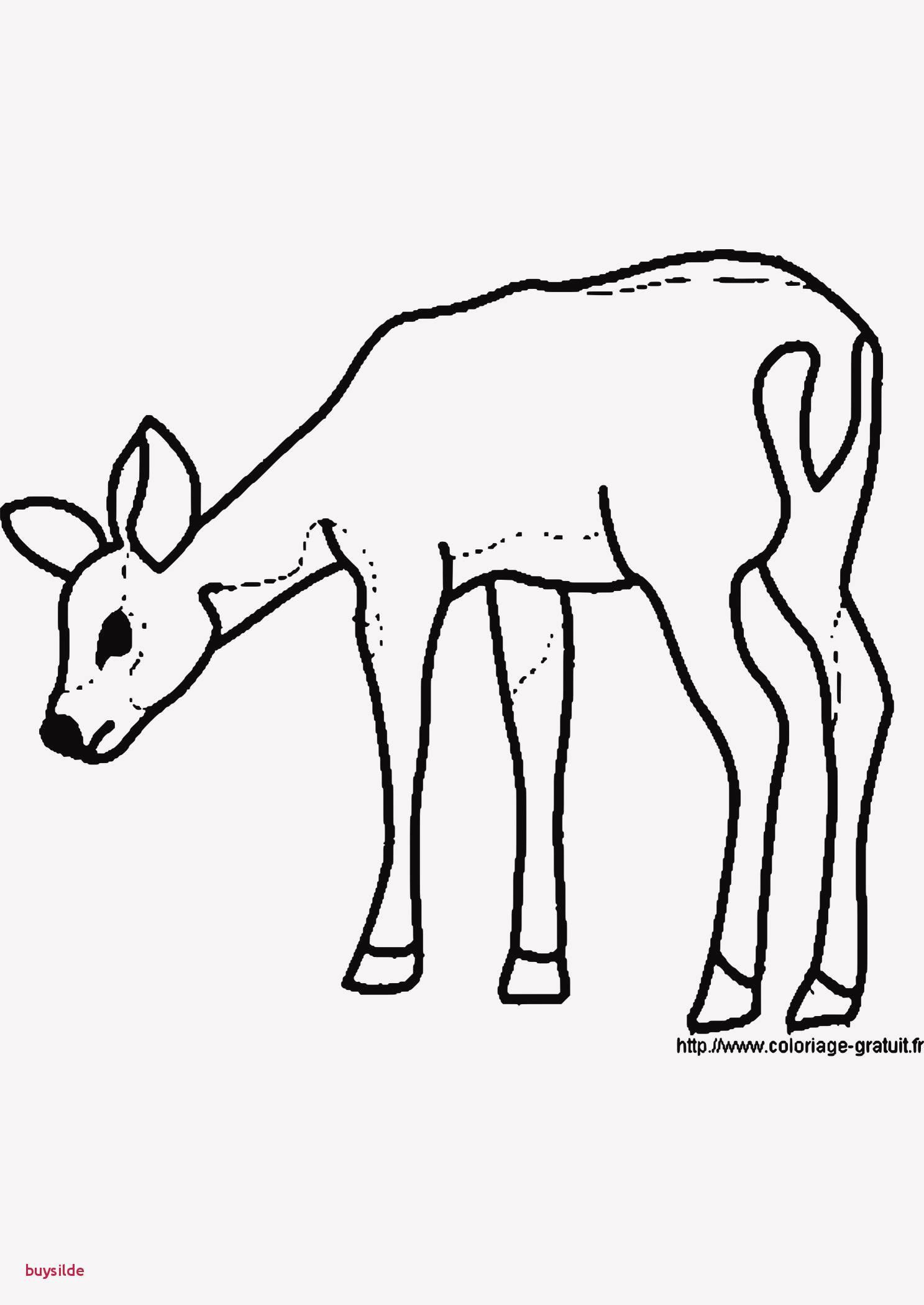 Reh Bilder Zum Ausmalen Inspirierend 25 Fantastisch Ausmalbilder Tiere Im Wald Kostenlos Sammlung