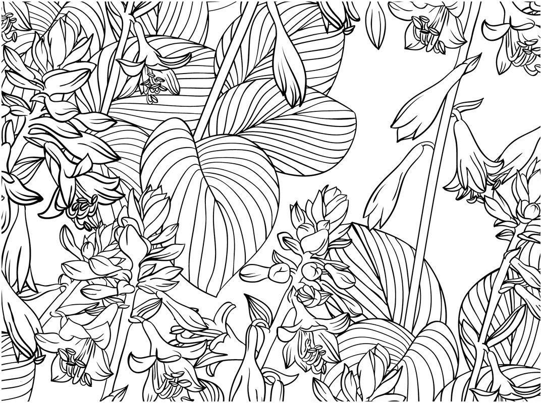 Rosen Zum Ausmalen Einzigartig 43 Schön Rosen Ausmalbilder – Große Coloring Page Sammlung Stock