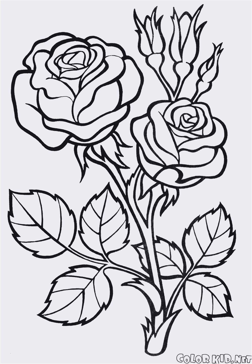 Rosen Zum Ausmalen Frisch Rose Ausmalbilder Einzigartig 32 Malvorlagen Blumen Rosen Bilder