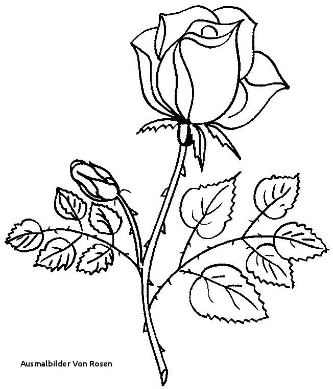 Rosen Zum Ausmalen Genial 22 Ausmalbilder Von Rosen Fotos