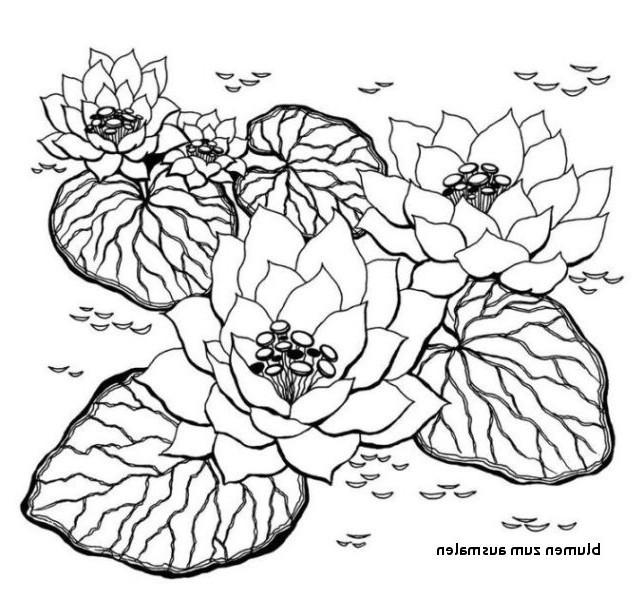 Rosen Zum Ausmalen Genial Ausmalbilder Blumen Bilder