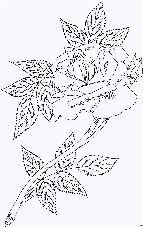 Rosen Zum Ausmalen Inspirierend 43 Schön Rosen Ausmalbilder – Große Coloring Page Sammlung Das Bild