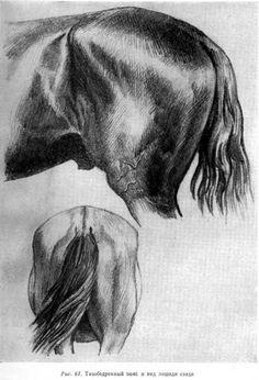 Schöne Und Das Biest Ausmalbilder Das Beste Von 751 Besten Pferde Zeichnen Bilder Auf Pinterest In 2018 Sammlung