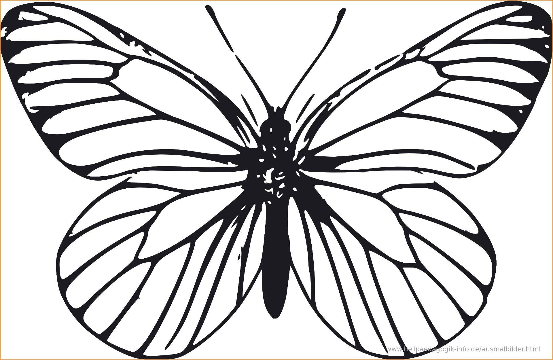 Schmetterling Bilder Zum Ausmalen Das Beste Von Schmetterling Elefant Spiel Reizvolle 35 Schmetterling Ausmalbilder Galerie