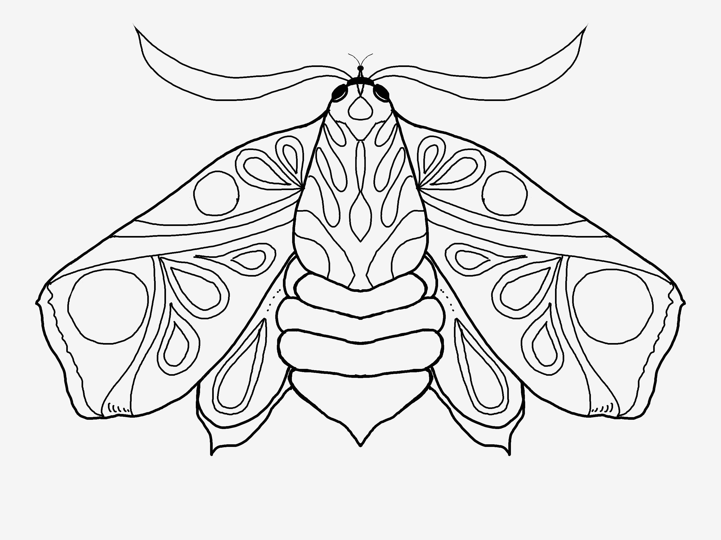 Schmetterling Bilder Zum Ausmalen Das Beste Von Verschiedene Bilder Färben Schmetterlingsbilder Zum Ausmalen Sammlung