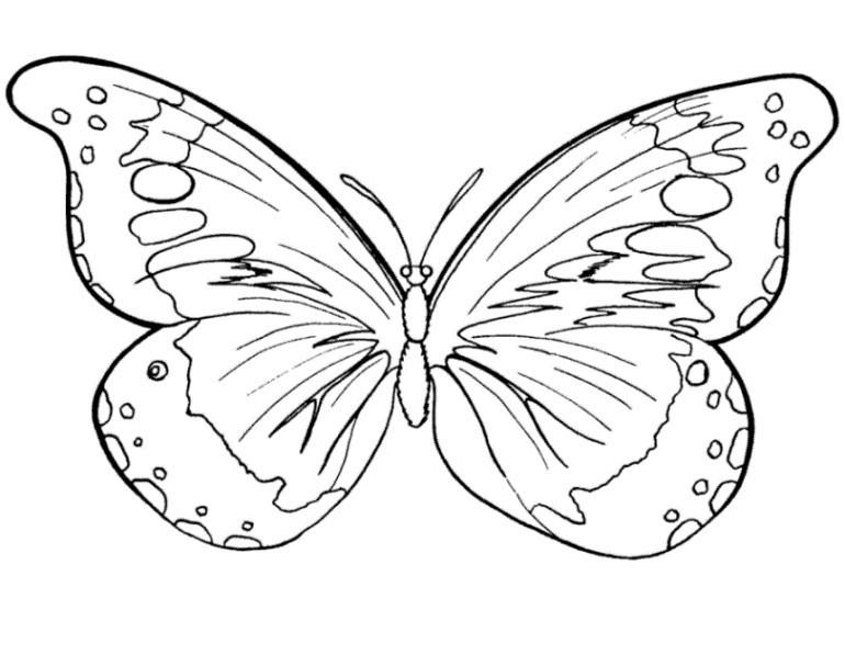 Schmetterling Bilder Zum Ausmalen Das Beste Von Vorlagen Zum Ausdrucken Ausmalbilder Schmetterling Malvorlagen 2 Fotografieren