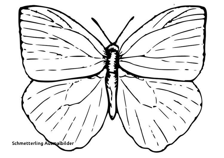 Schmetterling Bilder Zum Ausmalen Einzigartig Schmetterling Ausmalbilder Malvorlage A Book Coloring Pages Best sol Stock