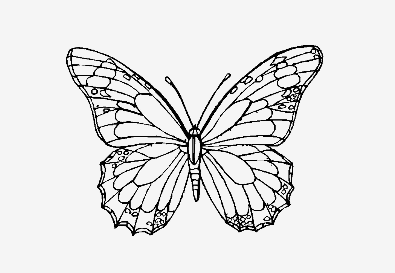 Schmetterling Bilder Zum Ausmalen Frisch Verschiedene Bilder Färben Schmetterlingsbilder Zum Ausmalen Bilder