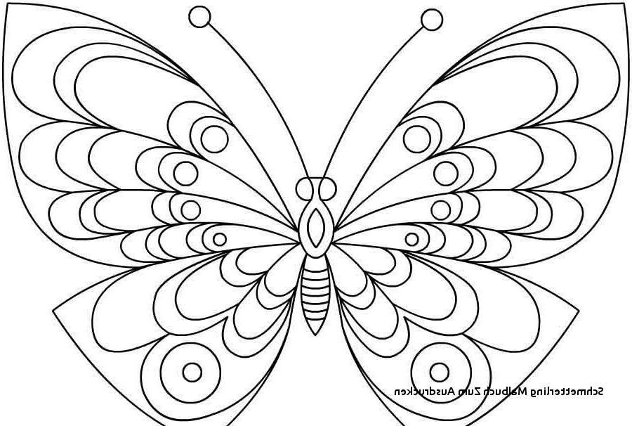 Schmetterling Bilder Zum Ausmalen Genial 23 Elegant Schmetterlinge Ausmalbilder – Malvorlagen Ideen Bilder