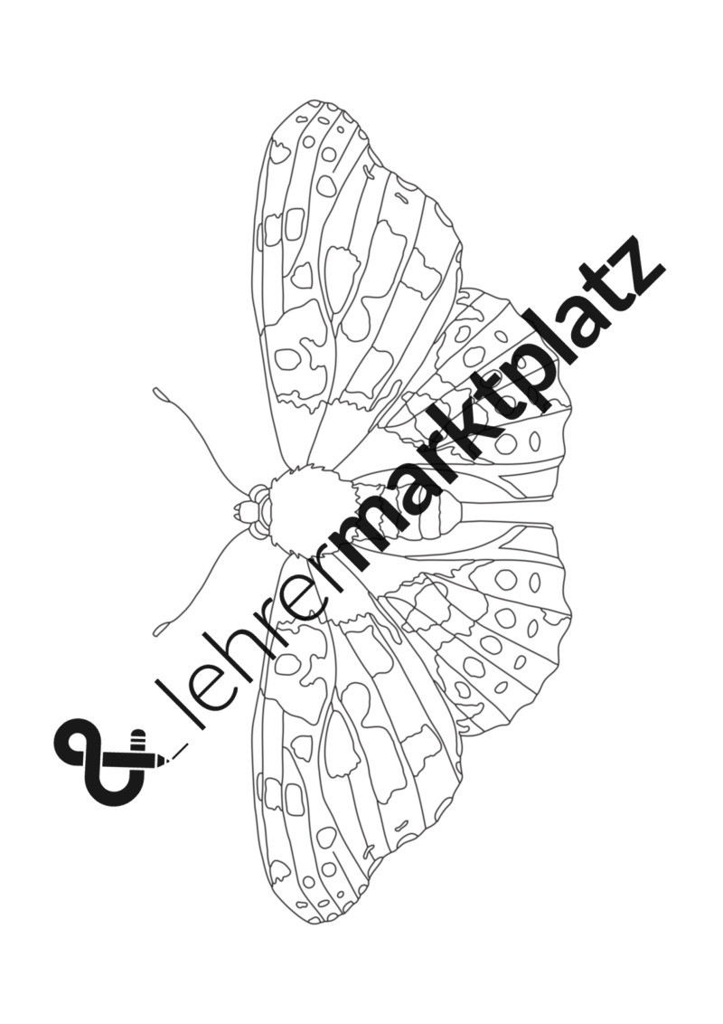 Schmetterling Bilder Zum Ausmalen Genial Schmetterling Vorlage Zum Ausdrucken Schmetterlinge Ausmalbilder Fotos
