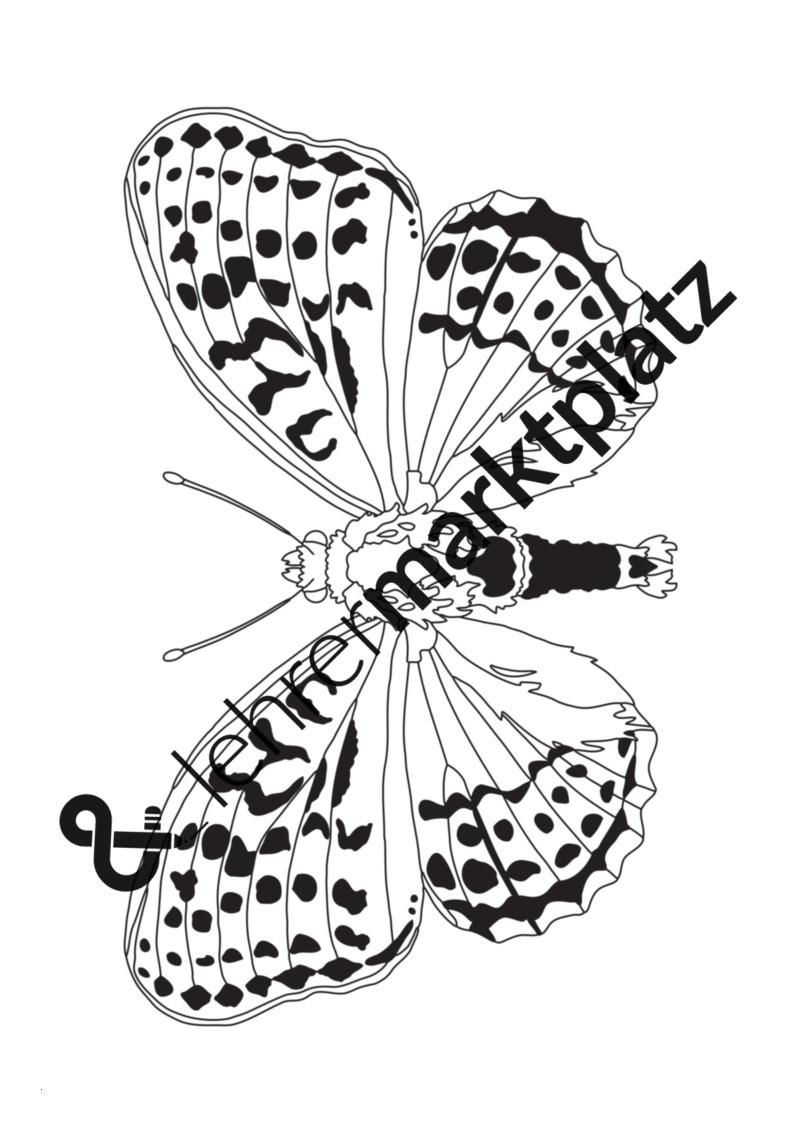 Schmetterling Bilder Zum Ausmalen Genial Schmetterlinge Ausmalbilder – Biologie Kita Kunst Lehreralltag Stock