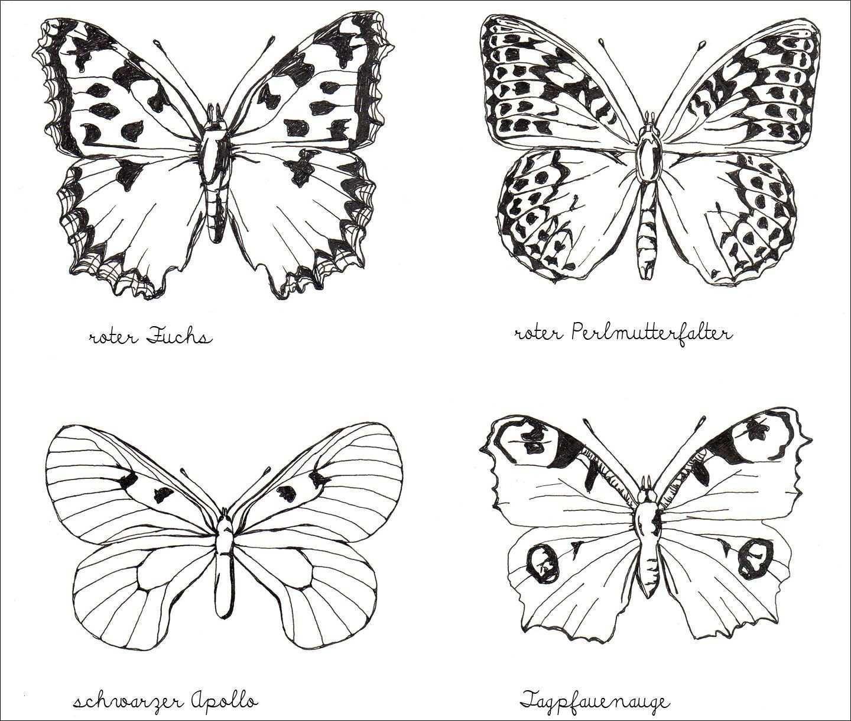 Schmetterling Bilder Zum Ausmalen Inspirierend Schmetterling Ausmalbilder Zum Ausdrucken Bild Ausmalbilder Bild