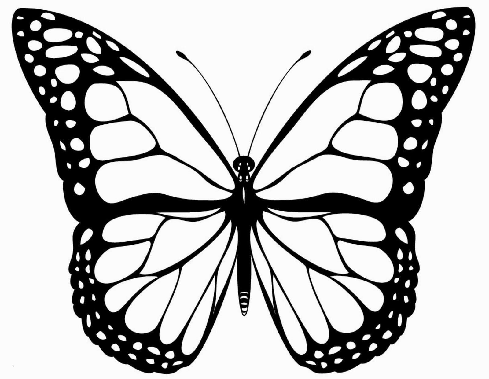Schmetterling Mit Blume Zum Ausmalen Das Beste Von Schmetterling Vorlage Zum Ausdrucken Ausmalbilder Schmetterling Zum Stock