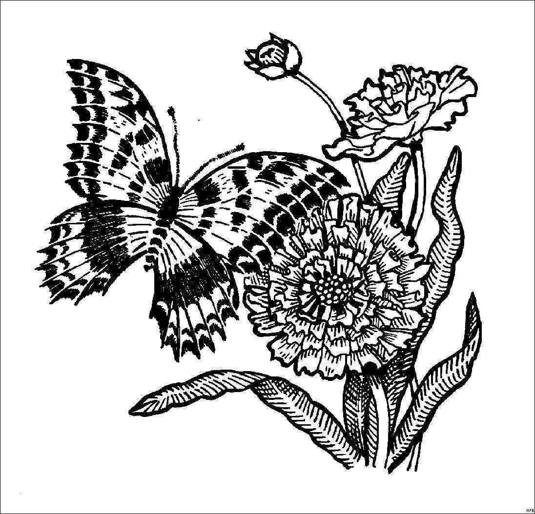 Schmetterling Mit Blume Zum Ausmalen Frisch Schmetterling Auf Blume Ausmalbilder Idee Ausmalbilder Für Bild